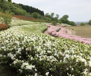 Image by Miyuki Kidani