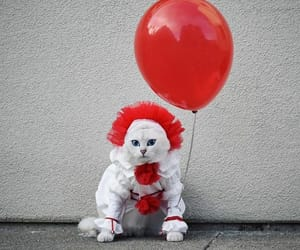 cat, it, and pennywise image