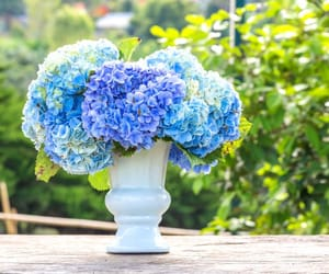 hydrangea bouquet and hydrangea for sale bulk image