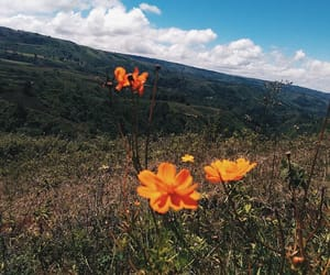 adventure, flower, and happiness image
