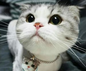 cat cute and kittens image