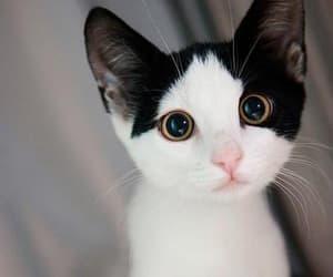 kittens cute