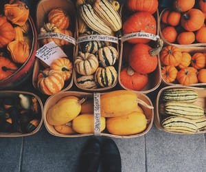 autumn, october, and squash image