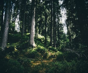 fir trees, inspiration, and nature image