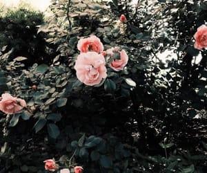 beautiful, flowers, and kawaii image