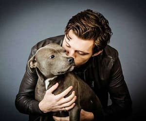 tom holland, dog, and spiderman image