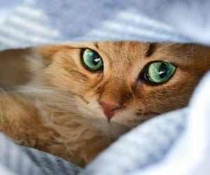 animals, cats, and weheartit image