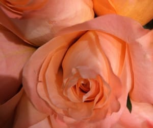 aesthetic, orange, and peach image