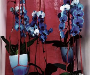 blue, tulips, and flowers image