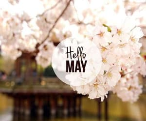 may, flowers, and hello image
