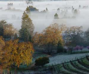 california, foggy morning, and sonoma county image
