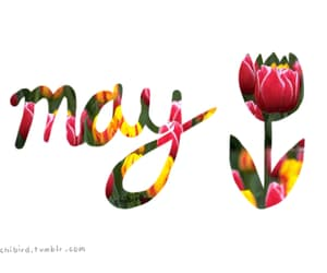 may, flowers, and gif image