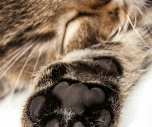 animals, paw, and cute image
