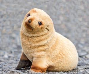 animal, seal, and adorable image