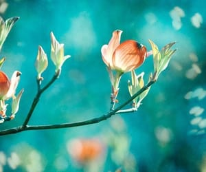 blue, spring, and nature image