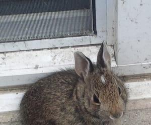 baby bunny, baby rabbit, and rabbit image