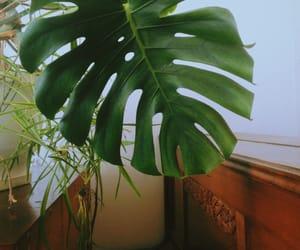 aesthetic, green, and harmony image