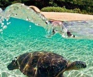 beach, turtle, and hawaii image