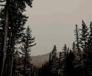 dark, forest, and photography image