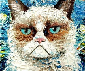 cat angry image