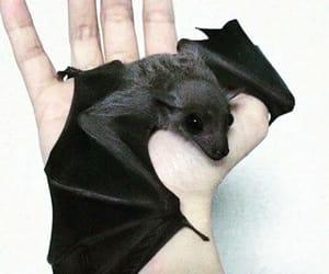 bat, black, and cute image