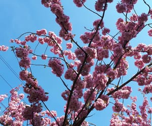 blue sky, flower, and flowers image