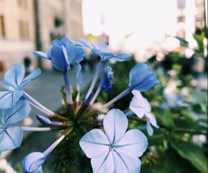 blue, blue flower, and camera image