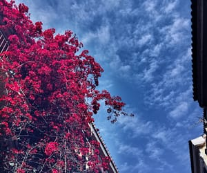 Athens, blue, and flowers image