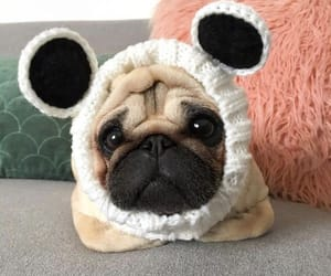 adorable, pug, and cute image