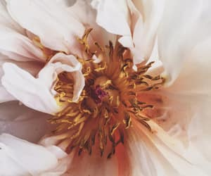 flower, photography, and inspiration image
