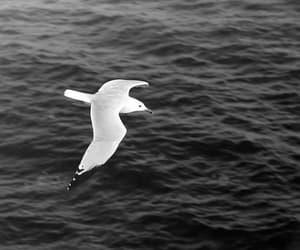 bird and ocean image
