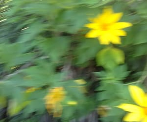 amarelo, flor, and flores image