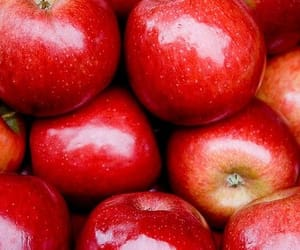 apple, FRUiTS, and red image