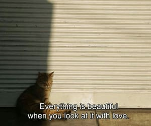 quotes, love, and cat image