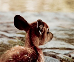 baby, deer, and water image
