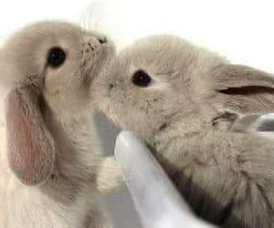 adorable, beautiful, and animals image