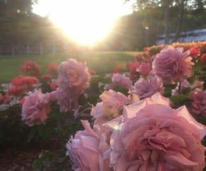 beauty, sun, and garden image