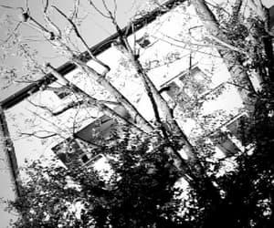 black, bw, and nature image