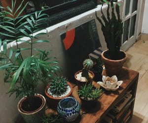 cactus, plants, and bedroom image