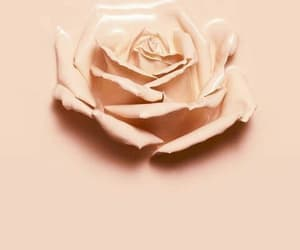 rose, wallpaper, and nud color image