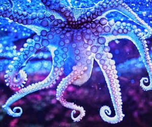 octopus asthetic image