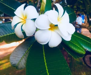 flowers and thailand image