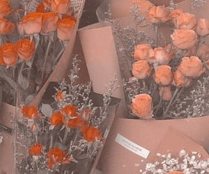 flowers, aesthetic, and rose image