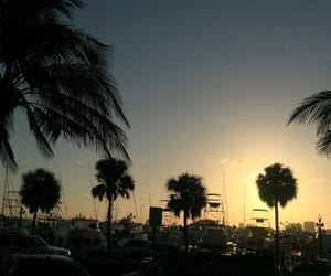indie, nature, and palm trees image