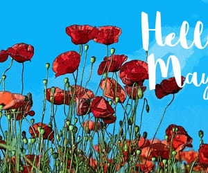 blue sky, flowers, and may image
