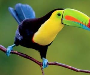 bird, Island, and toucan image