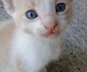 kittie, super cute, and 😺 image