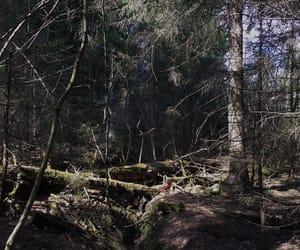 alternative, lake, and norway image
