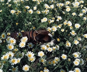 animals, flowers, and dog image