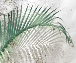 palm, plants, and summer image